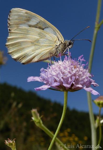 http://luis-alcaraz.es/files/gimgs/13_-luis-alcaraz----naturaleza-y-macro10.jpg
