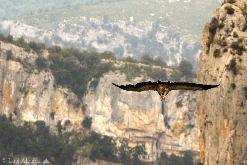 http://luis-alcaraz.es/files/gimgs/13_-luis-alcaraz----naturaleza-y-macro18.jpg