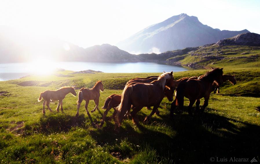 http://luis-alcaraz.es/files/gimgs/13_-luis-alcaraz----naturaleza-y-macro19.jpg