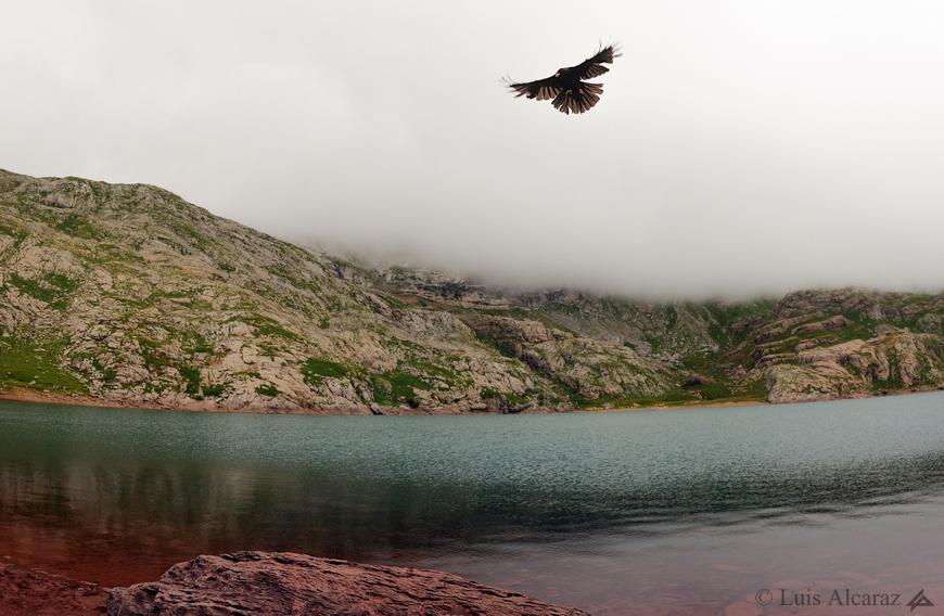 http://luis-alcaraz.es/files/gimgs/13_-luis-alcaraz----naturaleza-y-macro8.jpg